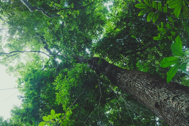 Evolutionary Diversity in Trees Ensure a Forest's Productivity