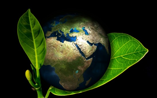 8 Top Tips for Making Your Home Eco-Friendly