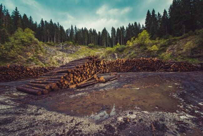 Logging is the Main Reason Behind Deforestation
