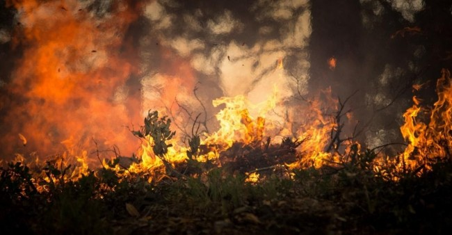 The Serious Effects of Wildfires on Water and the Environment