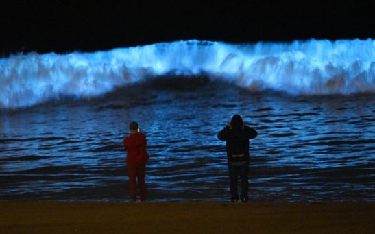 Bioluminescent Waves on California Coast Have Turned Into Red Tide That Smells Like Sulfur