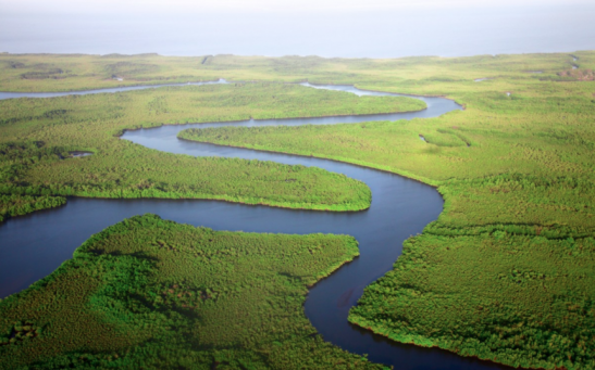 1.2 Million Inhabitants Might be Affected by Marshlands Rapidly Sinking in Louisiana Within 50 Years