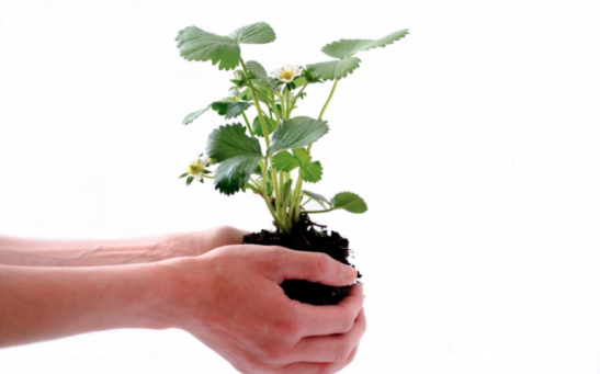 4 Benefits of Plant Therapy at Home