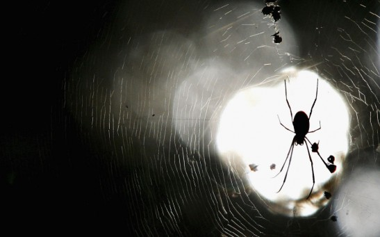 Concentrated Spider Season Due To Ideal Weather Conditions