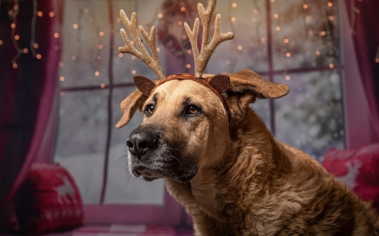 Science Times - Does Your Dog Howl Each Time You Sing a Christmas Carol? Experts Explain the Instinctive Reason for It