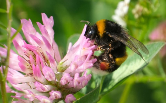 Science Times - Scientists Reveal Pesticide Is the Reason Bees Are Not Getting Adequate Sleep
