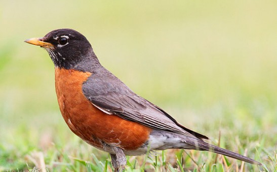 Science Times - Bird Tracker: Scientists Develop Electronic Device That Can Track Songbirds' Movement