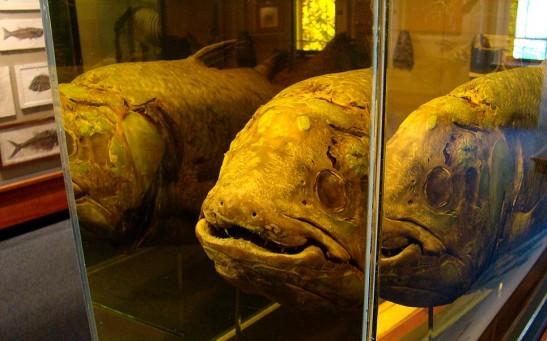 Coelacanths (2510664250)