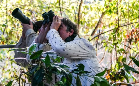 Birdwatching in the Amazon