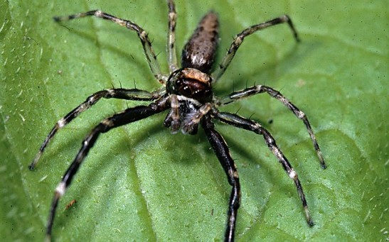 Science Times - Jumping Spiders Can Distinguish Living from Non-Living Things Through Vision Cues Used by Humans, Vertebrates, New Study Reveals