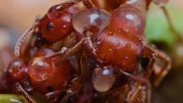 Clump of Ants.jpg