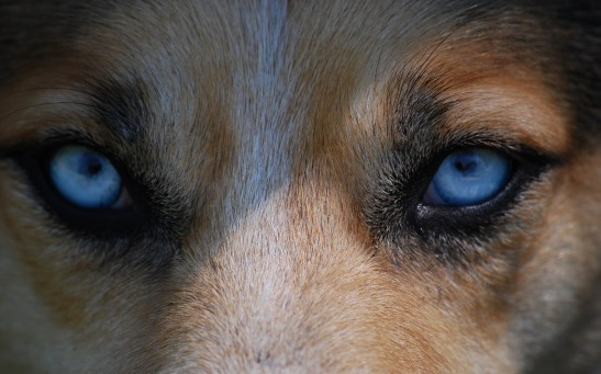 1.8 Million-Year-Old Jawbone of Eurasian Hunting Dog Found Alongside Human Remains