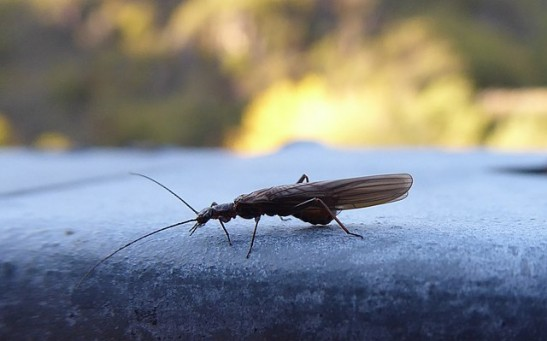 Science Times - Rapid Insect Evolution May Have Been Caused by Deforestation; Something Scientists Find Intriguing