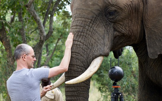 The combination of motion capture experiments and medical imaging reveals how an elephant controls the movements of its trunk. Here, Michel Milinkovitch and one of the elephants used in this study, Bela Bela, South Africa.