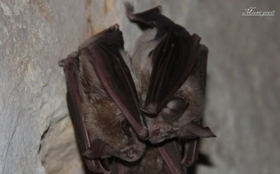 Bats in Laos Carry Coronavirus Sharing Similar Features With SARS-COV-2, Scientists Closer to Pinpointing COVID-19 Cause