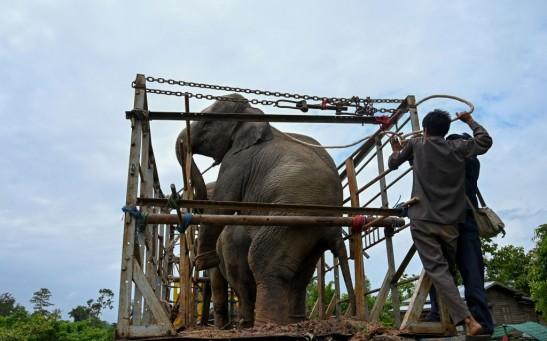 TOPSHOT-MYANMAR-ANIMAL
