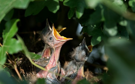 Baby Birds Returned to the Wild After Being Saved From Bulldozer; Habitat Loss Remains Primary Threat to Wildlife