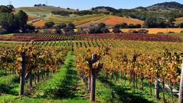 Science Times - California Vineyards Have Gone Chemical-Free; Wine Makers Now Use Nesting Owls to Protect Their Veins, an Advantage for Wine Production