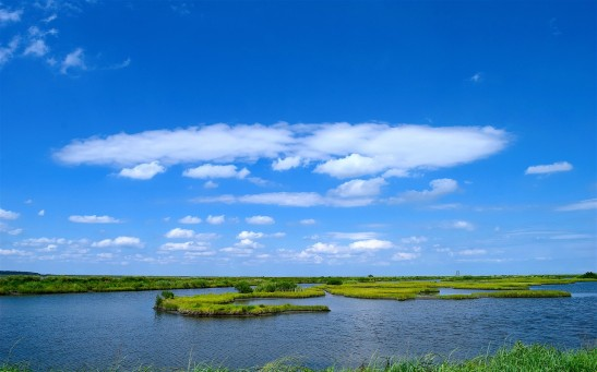 MIT Researchers Explore How Marsh Grass Provide Protection From Devastating Storm Surges Along the Shorelines